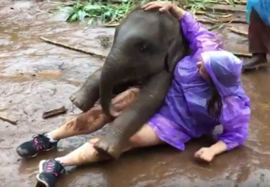 Baby elephant snuggling a human