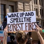 wake up and smell the forest fire